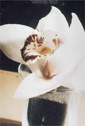lule1
